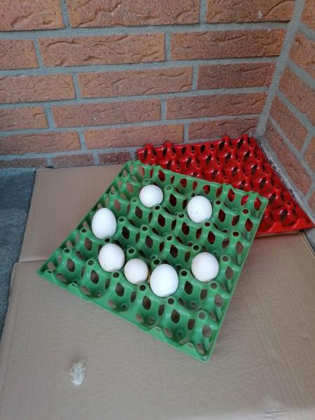Eierwabe für 30 Hühnereier